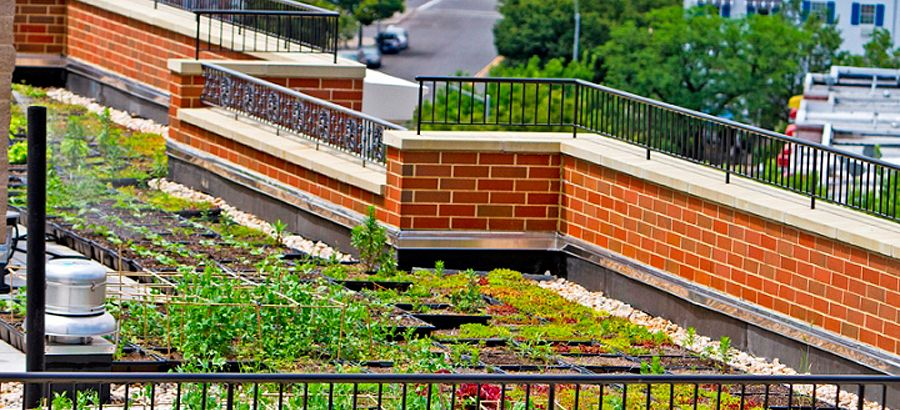 Rooftop garden at WHEDco's Intervale Green affordable housing development